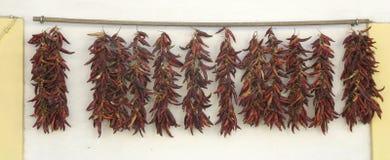 pepprar rött bundet kryddigt för serie royaltyfria foton