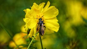 Pequeña abeja Imagen de archivo libre de regalías