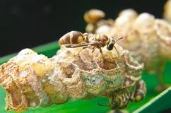 Pequeña abeja Fotografía de archivo libre de regalías