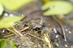 Pequeña abeja Imagenes de archivo