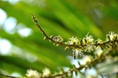 Pequeña abeja en el polen Imagen de archivo libre de regalías