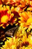 Pequeña abeja en la flor Imágenes de archivo libres de regalías