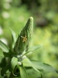Pequeña abeja en una planta de la dedalera Fotografía de archivo