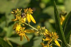Pequeña abeja ocupada Imágenes de archivo libres de regalías