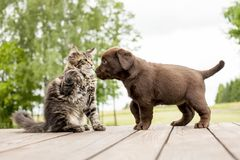 Pequeña amistad del perrito y del gatito imagenes de archivo