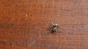 Pequeña araña almacen de metraje de vídeo
