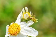 Pequeña araña Fotografía de archivo libre de regalías