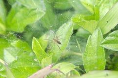 Pequeña araña Imágenes de archivo libres de regalías