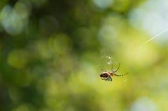 Pequeña araña Imagen de archivo libre de regalías