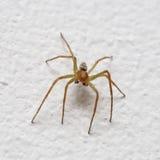 Pequeña araña en la pared fotos de archivo