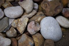 Pequeña araña en las rocas Foto de archivo libre de regalías