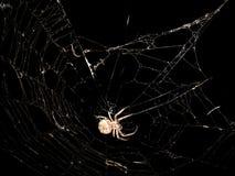 pequeña araña en un fondo negro Fotos de archivo libres de regalías