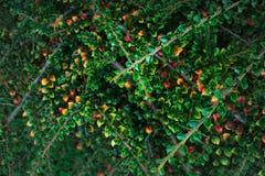 Pequeña belleza de la naturaleza del árbol de las hojas coloridas fotografía de archivo