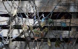 Pequeña bruja, muchacha en un traje de la bruja, muchacha vestida como bruja en el bosque con el sombrero, Halloween fotografía de archivo