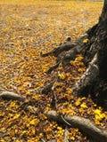 Pequeña caída amarilla de las flores en la tierra Fotos de archivo