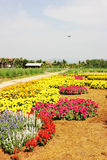 Pequeña cabaña en jardín de flores hermoso con el cielo azul Imágenes de archivo libres de regalías