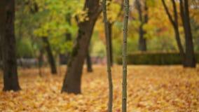 Pequeña cacerola de la vertical del árbol de arce almacen de video