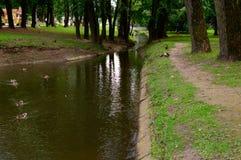 Pequeña cala del parque Árboles e hierba grandes alrededor Patos en el agua a Imagenes de archivo