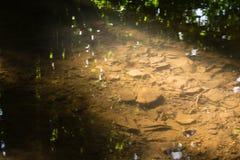 Pequeña cala en naturaleza del día de Forest Closeup Texture Cool Summer hacia fuera foto de archivo