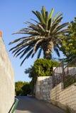 Pequeña calle con una palma en verano foto de archivo