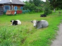 Pequeña casa, árbol verde y vaca Foto de archivo libre de regalías