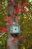 Pequeña casa azul del pájaro rodeada por las hojas rojas de la caída Fotografía de archivo libre de regalías