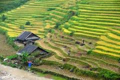 Pequeña casa con las terrazas del arroz Imagen de archivo