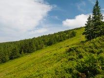 Pequeña casa de madera debajo de un árbol en las montañas fotos de archivo