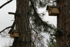 Pequeña casa de madera para los pájaros en el árbol de pino, concepto - cuide para los pájaros salvajes Imagen de archivo libre de regalías