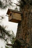 Pequeña casa de madera para los pájaros en el árbol de pino, concepto - cuide para los pájaros salvajes Foto de archivo