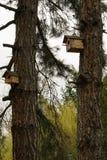 Pequeña casa de madera para los pájaros en el árbol de pino, concepto - cuide para los pájaros salvajes Imágenes de archivo libres de regalías