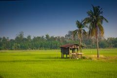 Pequeña casa en un campo del arroz Fotos de archivo
