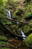 Pequeña cascada agradable en bosque profundo Foto de archivo