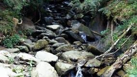 Pequeña cascada en bosque almacen de metraje de vídeo