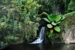 Pequeña cascada en el bosque imagen de archivo
