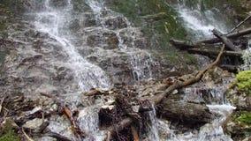 Pequeña cascada en las maderas almacen de video