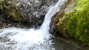 Pequeña cascada en una reserva de naturaleza metrajes