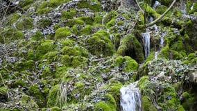 Pequeña cascada en una reserva de naturaleza almacen de video