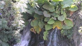 Pequeña cascada entre follaje verde almacen de metraje de vídeo