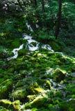 Pequeña cascada entre las rocas cubiertas con el musgo imagen de archivo