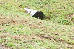 Pequeña Cat Hiding negra en campo imagen de archivo libre de regalías