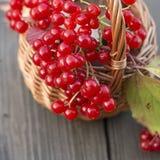Pequeña cesta con las bayas del rojo del otoño Foto de archivo