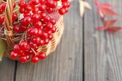 Pequeña cesta con las bayas del rojo del otoño Fotos de archivo libres de regalías