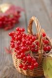 Pequeña cesta con las bayas del rojo del otoño Foto de archivo libre de regalías