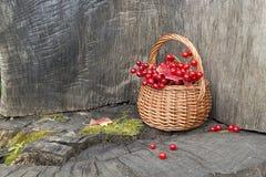 Pequeña cesta con las bayas del rojo del otoño Imágenes de archivo libres de regalías