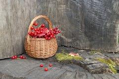 Pequeña cesta con las bayas del rojo del otoño Fotografía de archivo
