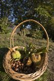 Pequeña cesta con las castañas y las cáscaras Imagenes de archivo