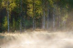 Pequeña charca del bosque en la salida del sol Imágenes de archivo libres de regalías