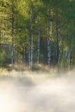 Pequeña charca del bosque en la salida del sol Fotos de archivo