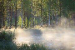 Pequeña charca del bosque en la salida del sol Fotos de archivo libres de regalías